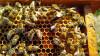 Пчелиные матки. Бджоломатки.